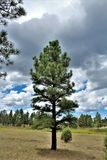 White Mountain Nature Center, Pinetop Lakeside, Arizona, United States. Scenic landscape view at the White Mountain Nature Center, located in Pinetop Lakeside stock photo