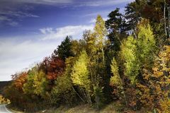 White Mountains. Forest in the autumn, New Hampshire Royalty Free Stock Image