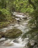 White Mountains River. Little river flowing through the forest of the White Mountains National Park, in the state of New Hampshire (USA Stock Image