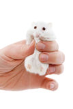 White mouse in human hand Stock Photo