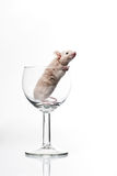 White Mouse In Glass Stock Image