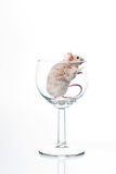 White Mouse In Glass Royalty Free Stock Image