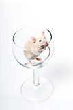 White Mouse In Glass Royalty Free Stock Photos