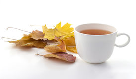 White mug of tea on a white background with autumn leaves Stock Image