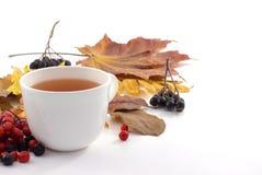 White mug of tea on a white background with autumn leaves. White mug of tea with autumn leaves Royalty Free Stock Photo