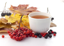 White mug of tea on a white background with autumn leaves Stock Photo