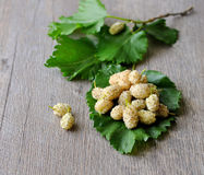 White mulberries Royalty Free Stock Images