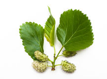 White mulberries Stock Photo