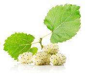 White mulberries isolated on the white background stock photo