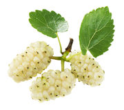 White mulberries on the white background stock photos