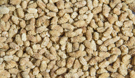 White mulberry Royalty Free Stock Photography
