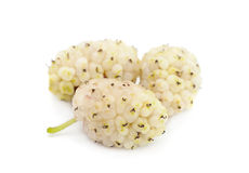 White mulberry fruit Royalty Free Stock Images