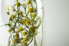 White Multi Petaled Flower Stock Photo