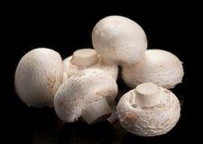 Free White Mushroom Stock Photo - 16420850