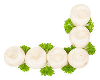 White mushroom. Fresh Mushrooms Champignon with  parsley lie at right angles  on a white background Stock Photos