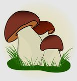 White mushroom on a white background. Vector EPS Stock Photos
