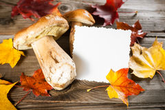 White Mushroom (cep) Royalty Free Stock Photo