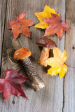 White Mushroom (cep) Royalty Free Stock Image