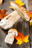 White Mushroom (cep) Royalty Free Stock Photography