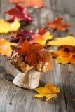 White Mushroom (cep) Royalty Free Stock Images