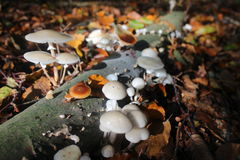 White mushroom on fallen tree Stock Photos