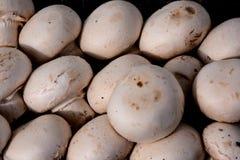 White Mushroom Food Stock Image
