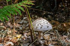 White mushroom in the forest Stock Photo