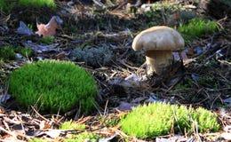 White mushroom Stock Images