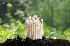 White mushroom on Ground invigorating. Stock Photos
