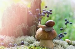 Free White Mushroom Grows In The Forest Among Mosses And Berries, A Snail Sits On Top Stock Images - 194235954