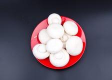 White mushroom Royalty Free Stock Image