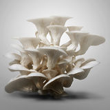 White mushroom Top light Stock Image