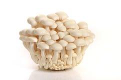 White mushroom. On white background royalty free stock photos