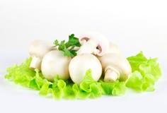 White mushrooms Stock Photography