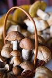 White mushrooms stock images