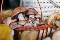 White mushrooms Royalty Free Stock Images