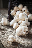 White Mushrooms Cepes scattered from black basket Stock Images