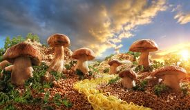 mushrooms in the glade of buckwheat royalty free stock image