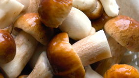 White mushrooms stock video footage