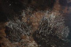 White mushrooms in the dark on wood log. Royalty Free Stock Photo