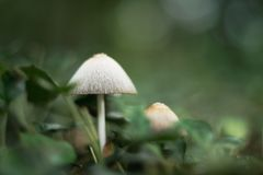White mushrooms in a forest royalty free stock image