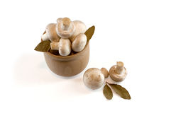 White mushrooms isolated on white Stock Image