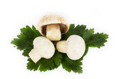 White mushrooms on white background Royalty Free Stock Photo