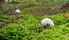White mushrooms stock image