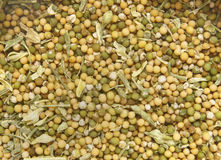White mustard. Close up image of white mustard seeds Stock Photography