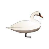White mute swan. Standing white feather mute swan Stock Image