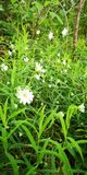 White'n green power. Whiten, flowee, flower, summer stock image