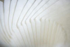 White napkins Royalty Free Stock Photos