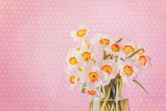 White narcissus flowers, bouquet in vase on pink background. Royalty Free Stock Images