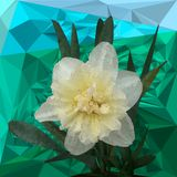 White narcissus in the triangulation. against the backdrop of triangulation. stock illustration